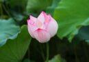 Ngày Rằm Tháng Tư Trong Phật Giáo – Đức Bồ Tát Tiền Kiếp Của Đức Phật Gotama